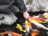 Hungry Fish!!