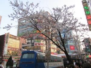 In Shinchon II