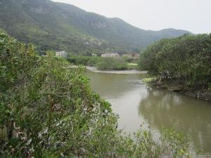 Mangroves in Wetland