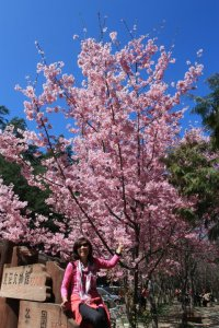 My host mom excited to be among the cherry blossoms