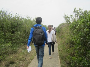 Walking through the mangroves