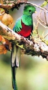 5_Beautiful quetzal