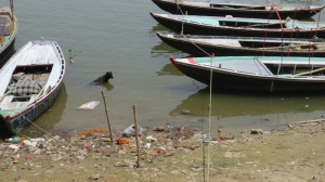 Doggy bathing in the Ganges, Varanasi
