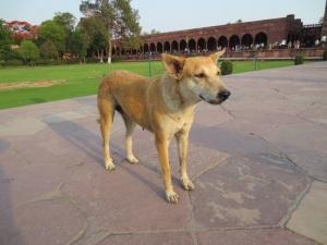 India has the most photogenic animals