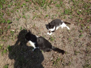 My Cat Friends at Roztocze Horse Farm Museum