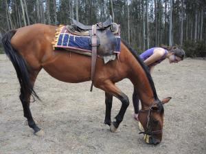 My friend, Rebecca, and the Horse