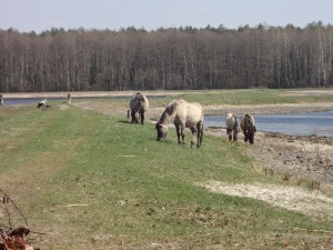 Ponies and Bird Eat Lunch