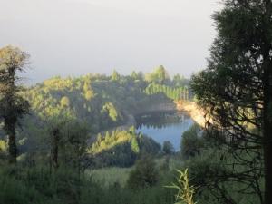 Pristine forests of Darjeeling