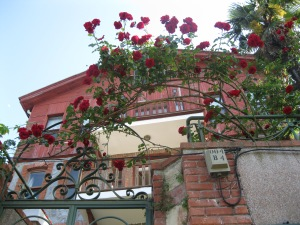 Rose Covered Fences