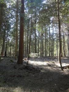 Roztocze Forest