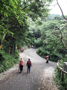 Taiwanese people love to hike in the mountains and see the _Spring Snows,_ where the Tung trees drop their blossoms all over the trails