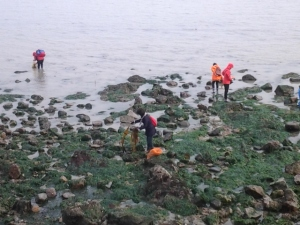 There were tons of people collecting seaweed