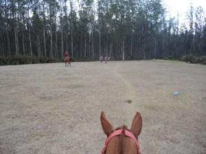 View Atop a Horse